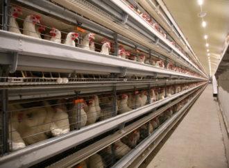 Компания отсудила право на строительство 6 птичников
